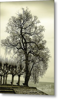 A Winter Touch Metal Print by Syed Aqueel