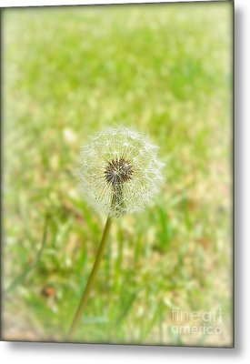 A Wish Metal Print by Lorraine Heath
