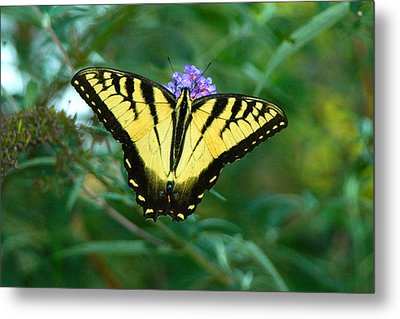 A Yellow Butterfly Metal Print by Raymond Salani III