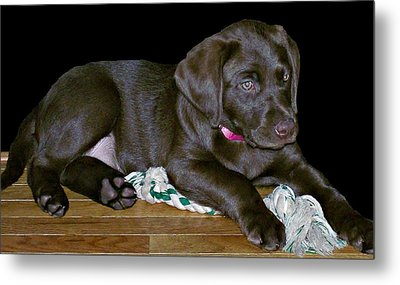 Abby Metal Print by Barbara S Nickerson