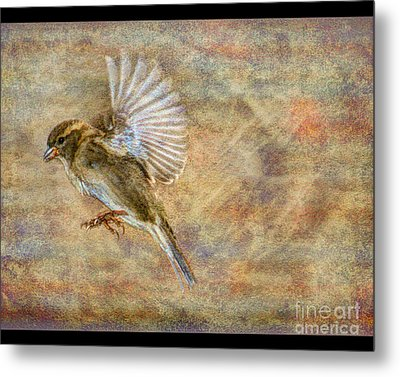 About To Land Metal Print by Jim Wright