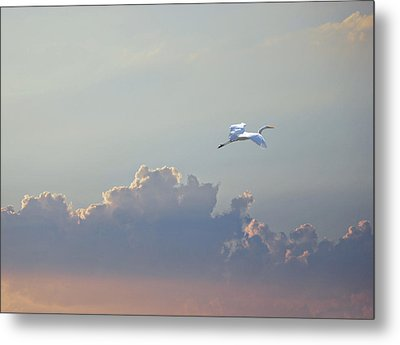 Above It All Metal Print by Adele Moscaritolo