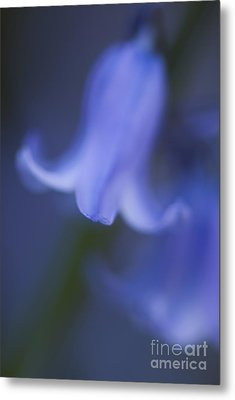 Abstract Bluebell Metal Print by Anne Gilbert