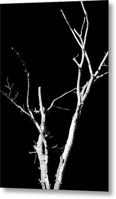 Abstract Branches Metal Print by Maggy Marsh