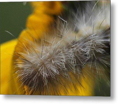 Abstract Caterpillar Metal Print