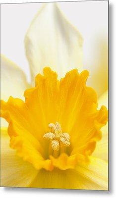 Abstract Daffodil Metal Print