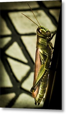 Abstract Grasshopper Metal Print by Karen Wiles
