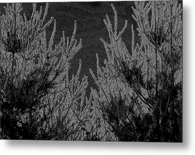 Abstract Pine Trees Metal Print