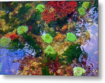 Abstract Tidal Pool Metal Print