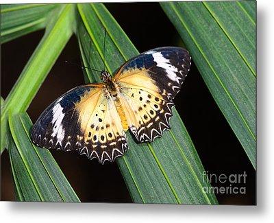 Butterfly On Leaves Metal Print by Tamara Becker