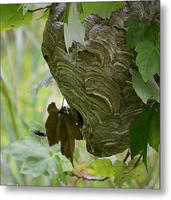 Abstract Wasp Metal Print by Mary Zeman
