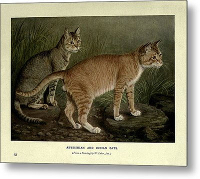 Abyssinian And Indian Cats Metal Print by Philip Ralley