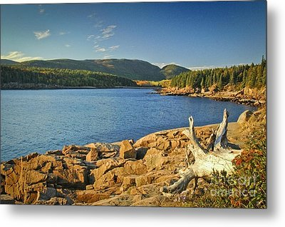 Acadia Otter Cove Metal Print by Alana Ranney