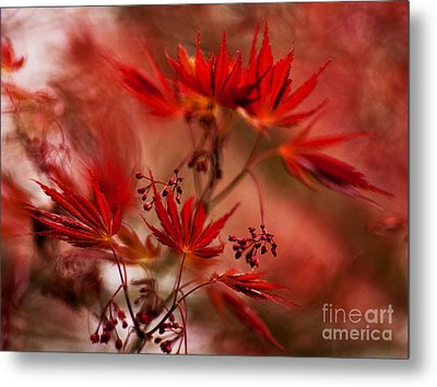Acer Storm Metal Print by Mike Reid