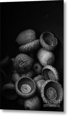 Acorns Black And White Metal Print by Edward Fielding