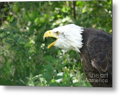 Metal Print featuring the photograph Adler Raptor Bald Eagle Bird Of Prey Bird by Paul Fearn