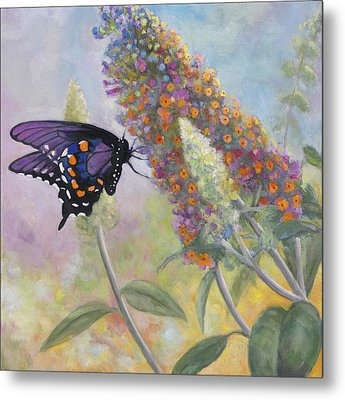 Admiral Butterfly Metal Print by John Zaccheo