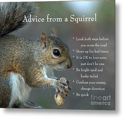 Advice From A Squirrel Metal Print
