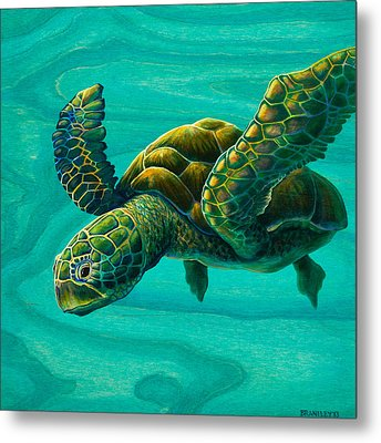 Aeko Sea Turtle Metal Print by Emily Brantley