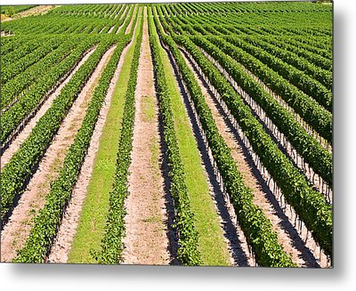 Aerial View Of Vineyard In Ontario Canada Metal Print by Marek Poplawski