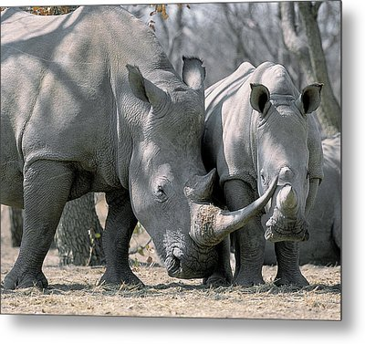 Africa, Namibia White Rhino Mother Metal Print