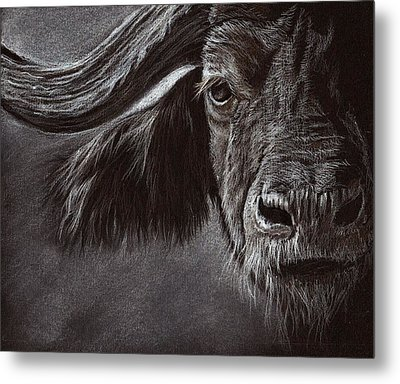 Metal Print featuring the drawing African Buffalo by Heidi Kriel