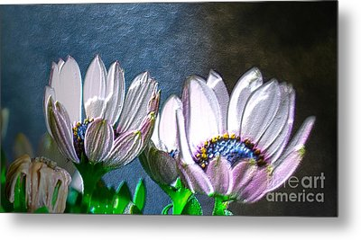 African Daisy Detail Metal Print by Donna Brown