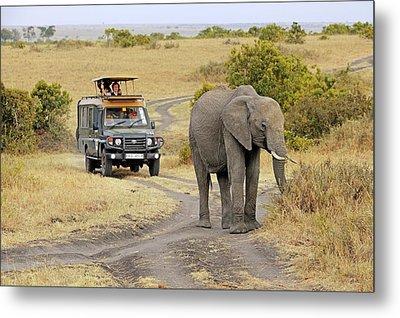 African Elephant Metal Print by Bildagentur-online/mcphoto-schulz