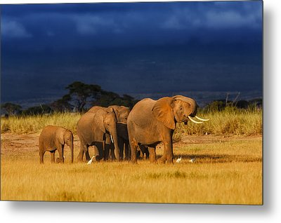 African Elephant Herd Metal Print by Maggy Meyer