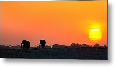 Metal Print featuring the photograph African Elephant Sunset by Amanda Stadther
