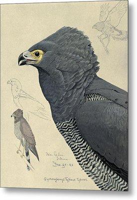 African Harrier-hawk Metal Print by Anton Oreshkin