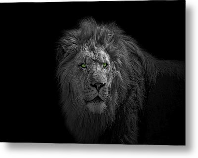 Metal Print featuring the photograph African Lion by Peter Lakomy