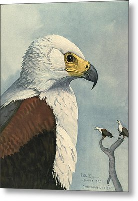 African Sea Eagle  Metal Print by Rob Dreyer