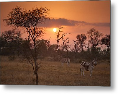 African Sunrise Metal Print by Craig Brown