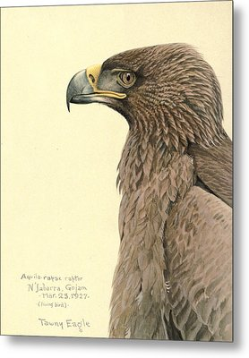 African Tawny Eagle Metal Print by Rob Dreyer