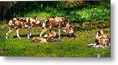 African Wild Dog Family Metal Print by Miroslava Jurcik