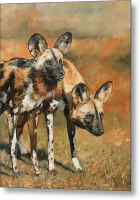 African Wild Dogs Metal Print by David Stribbling
