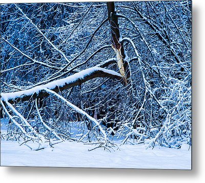 After The Icy Rain - Featured 3 Metal Print by Alexander Senin