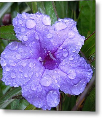After The Rain #1 Metal Print by Robert ONeil