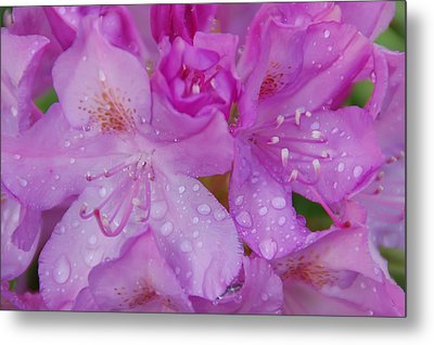Metal Print featuring the photograph After The Rain by Aimee L Maher Photography and Art Visit ALMGallerydotcom
