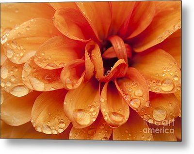 After The Rain Metal Print by Anne Gilbert