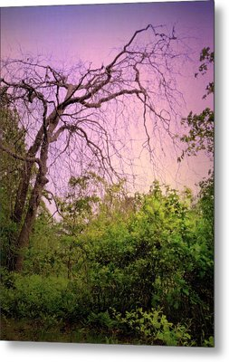 Metal Print featuring the photograph After The Rain by Jim Whalen