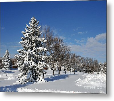 After The Snow 2 Metal Print by Graham Taylor
