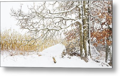 After The Snow Storm Metal Print