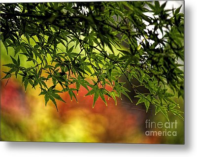 Afternoon Glow Metal Print by Peggy Hughes