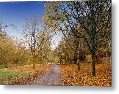 Afternoon In Autumn  Metal Print