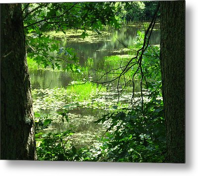 Afternoon Reflections Metal Print by Bruce Carpenter