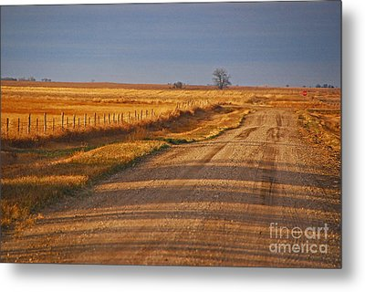 Afternoon Shadows Metal Print by Mary Carol Story