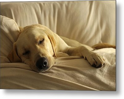 Afternoon Snooze Metal Print