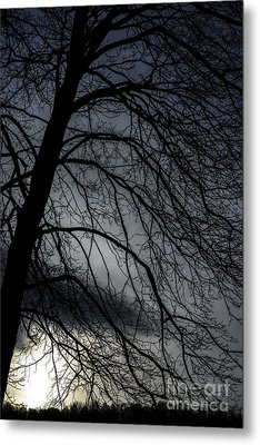 Against A Winter Sky Metal Print by Thomas R Fletcher